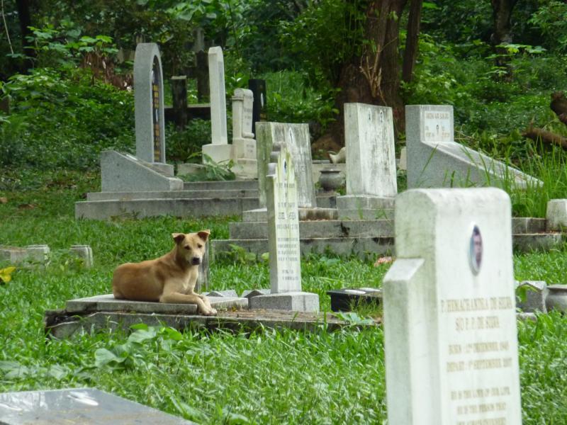 Dog in Cemetery